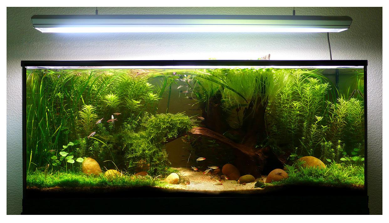 idée déco aquarium 200l
